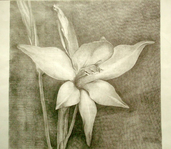 Pin fiori di luce le orme on pinterest for Disegni di fiori a matita