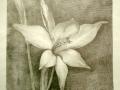 fiore-matita-su-carta-30x30-1999
